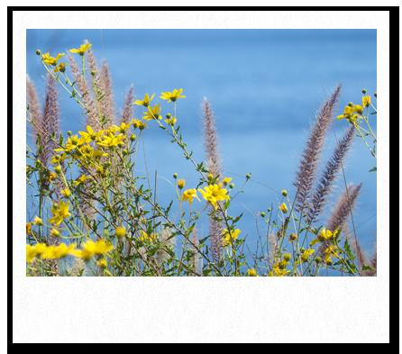 Chula Vista Wildlife Habitat