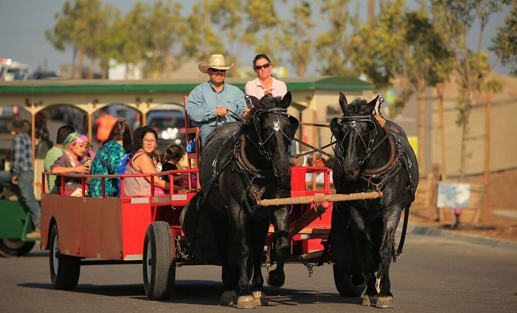 horse-and-carriage-rides-1024x620