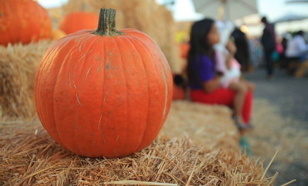 orange-pumpkin-on-haystack-1024x620